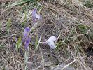 fovefat_2009_rudo_p5160119.jpg: 202k (2009-05-16 11:16)
