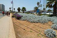 israel_2014_day2_p103006220.jpg: 221k (2014-05-03 10:23)