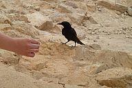 israel_2014_day4b_p103035963.jpg: 128k (2014-05-06 12:01)