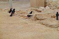 israel_2014_day4b_p103036064.jpg: 130k (2014-05-06 12:05)