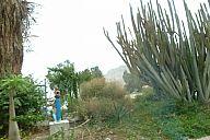 israel_2014_day4b_p103037881.jpg: 132k (2014-05-06 13:23)