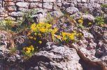 promo_01-04-hrad-strecno.jpg: 73k (2003-04-15 17:09)