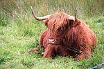 scotland_2010_halkova_single_img_1880c.jpg: 159k (2010-09-10 16:05)