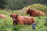 scotland_2010_halkova_single_img_1883.jpg: 174k (2010-09-10 16:06)