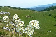 vfatra_2014_slavo_p103067094.jpg: 165k (2014-06-28 16:24)