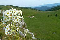 vfatra_2014_slavo_p103067195.jpg: 103k (2014-06-28 16:25)